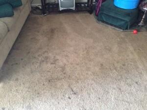 Morgan Hill-Dirty-Carpet