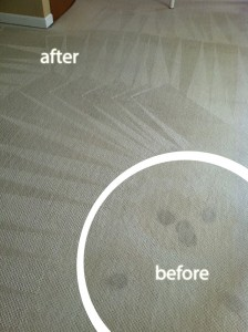 Morgan Hill-Wine-Stain-Carpet-Cleaning