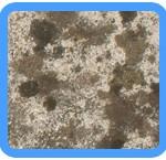 Water-Mold-Removal-Morgan Hill